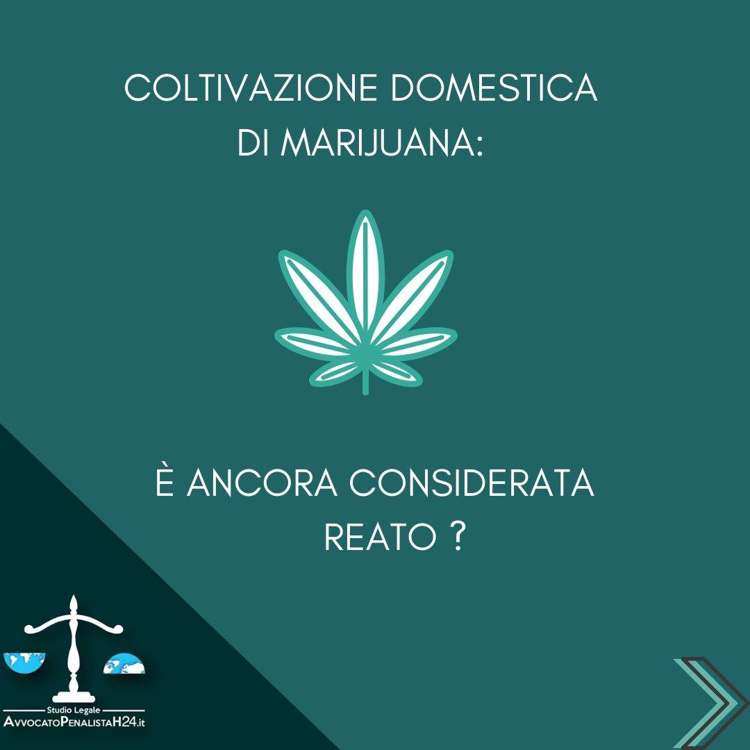 Coltivazione domestica di marijuana, quando non è considerata reato?