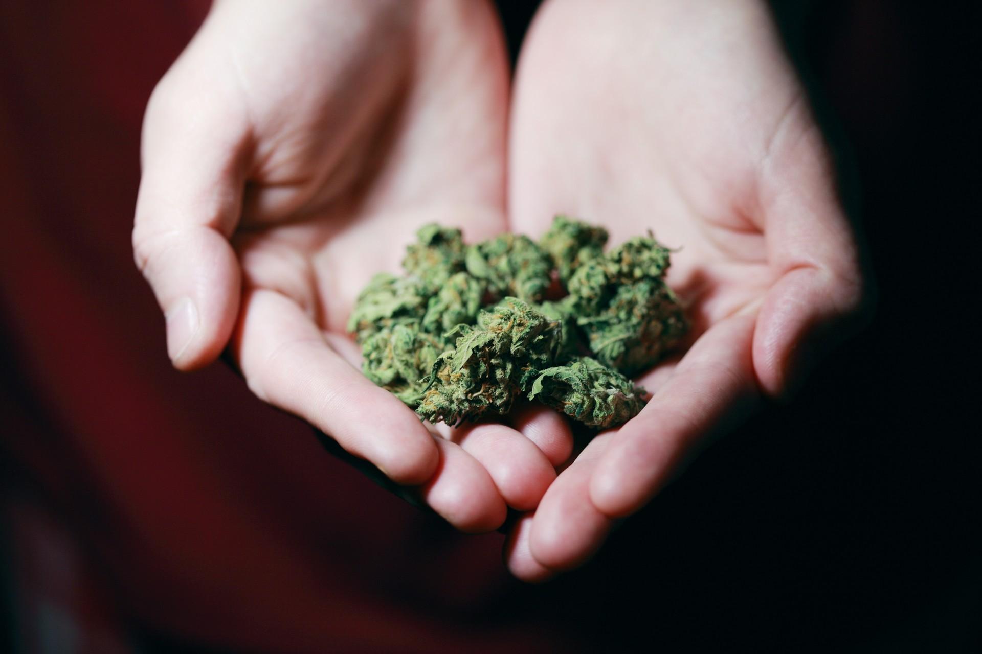 Cannabis, piccolo spaccio droga